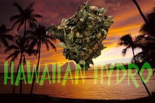 Hawaiian+Hydro_legal+bud.jpg